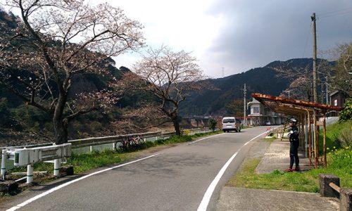 熊本は桜が咲き始めてる!八代センチュリーライドにプチ参加してきた