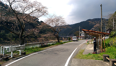 桜が奇綺麗なサイクルイベント「八代センチュリーライド」