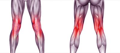 膝周りの筋肉画像