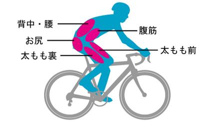 ロードバイクのペダリングで使う筋肉